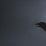 Fórum Noční hlídky